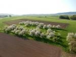 Ballonfahrt in den Kirschblütenfrühling 2018